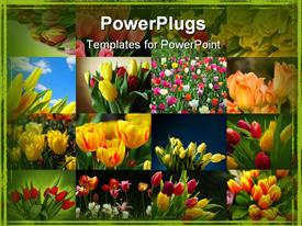 PowerPoint template displaying collage of colorful tulips, green border