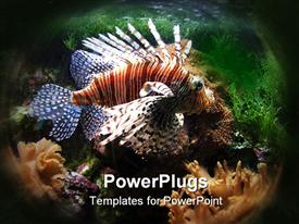 Exotic fish swimming on the bottom of aquarium powerpoint template