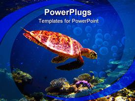 PowerPoint template displaying turtoise swimming at the bottom of the sea with the sight of jelly fish