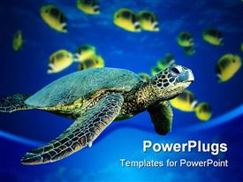 Turtle swimming underwater powerpoint theme