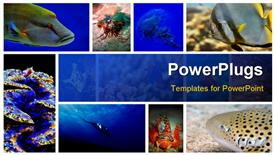 Collage of the colorful underwater life in Asia powerpoint template