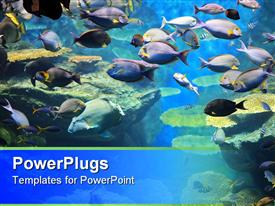 Underwater colorful tropical fishes and beautiful corals template for powerpoint