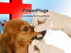 PowerPoint template displaying veterinary doctor examining teeth of Dachsund with capsules and red cross