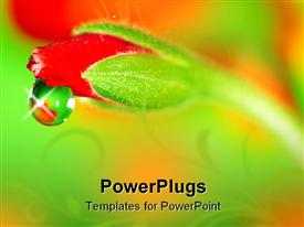 PowerPoint template displaying close up of water rain drop from a red rose bud on blurred background