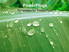 PowerPoint template displaying abstract 1 is a leaf in a rain forest with water droplets on it