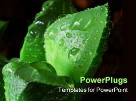 PowerPoint template displaying close up of succulent leaf with dew drops