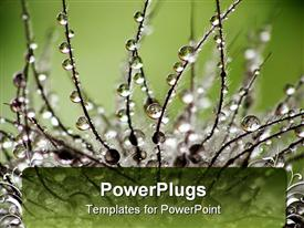 PowerPoint template displaying a plant with dew drops and a greenery in the background