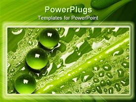 Fresh and pure green nature background - leaf pattern with water drops presentation background