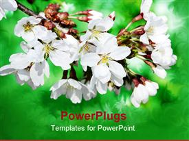 Branch of spring white flowers against floral green background template for powerpoint