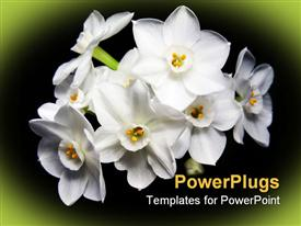 PowerPoint template displaying bunch of lovely white flowers on black and green background
