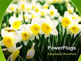 PowerPoint template displaying a number of white flowers with a lot of flowers in the background