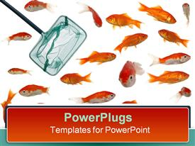 PowerPoint template displaying many fish and goldfish with fishing net on white background