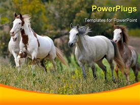 PowerPoint template displaying american wild mustang horses in the background.