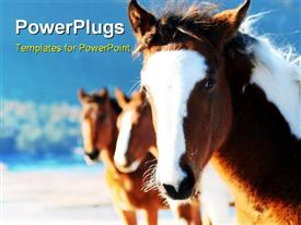 Wild horses template for powerpoint