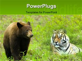PowerPoint template displaying leopard with young brown bear together on grass field