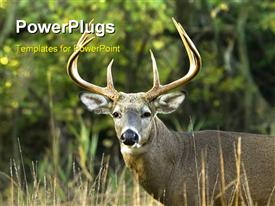 PowerPoint template displaying close up of whitetail buck looking at camera