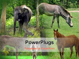 PowerPoint template displaying collage of Elephant, Zebra, Horse and antelope in green field
