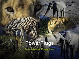 Montage - Africa - wildlife including lion elephant zebra giraffe Botswana and Namibia template for powerpoint