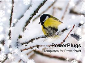 Titmouse On Tree On Snow-clad Branch In Winter powerpoint template