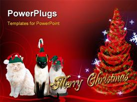 Cats adorned with Christmas attire over holiday background powerpoint template