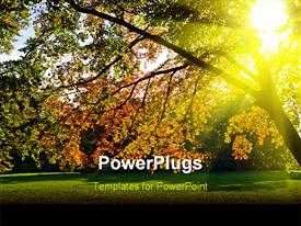 PowerPoint template displaying sun lighted yellow autumn tree in a park in the background.