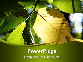 PowerPoint template displaying sun shining through a yellow elm leaf making it glow
