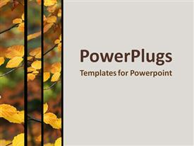 PowerPoint template displaying yellow leaves hanging on a branch