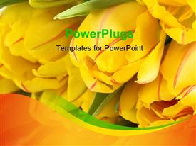 Bouquet of yellow tulips powerpoint design layout